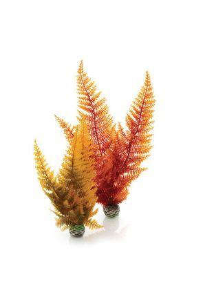 Reef One Autumn Fern easy Plant