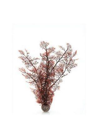 Reef One Crimson Sea Fan Plant (Large)