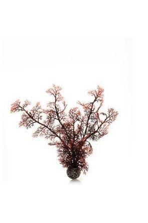 Reef One Crimson Sea Fan Plant (Medium)