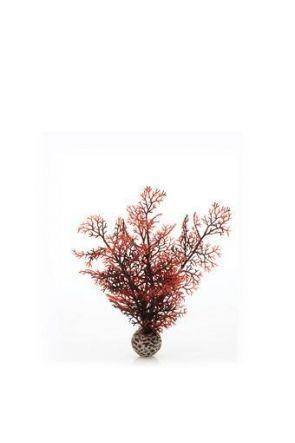 Reef One Crimson Sea Fan Plant (Small)