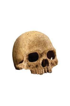 Exo Terra Primate Skull (PT2855)