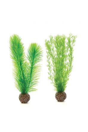 Feather Fern Plants