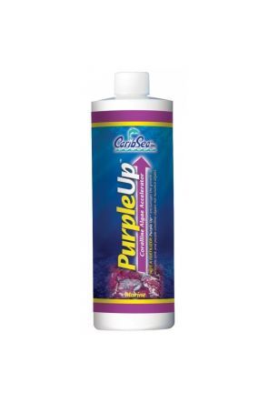 CaribSea Purple Up