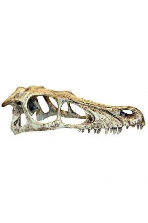 Komodo Raptor Skull (Large)