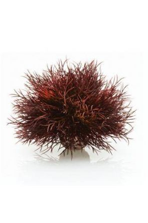 Reef One Crimson Sea Lilly  - PL21