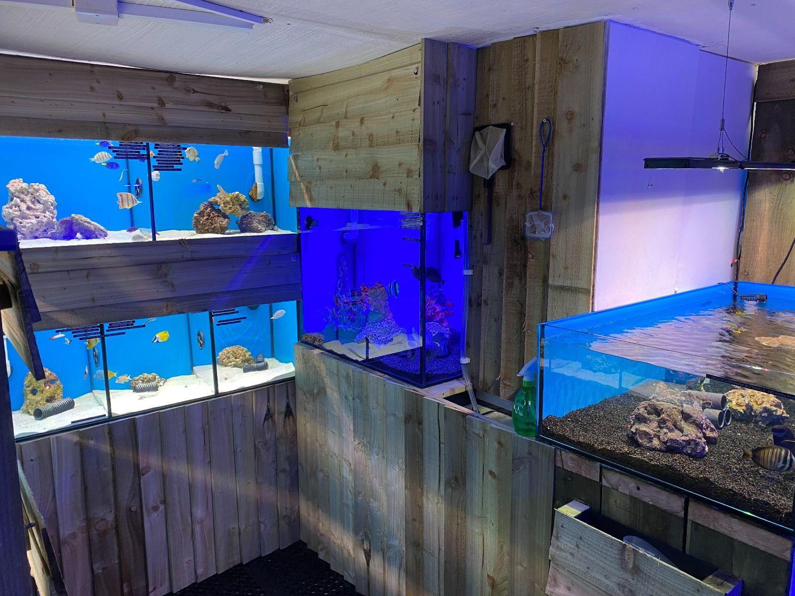 Marine Room - Fish 2