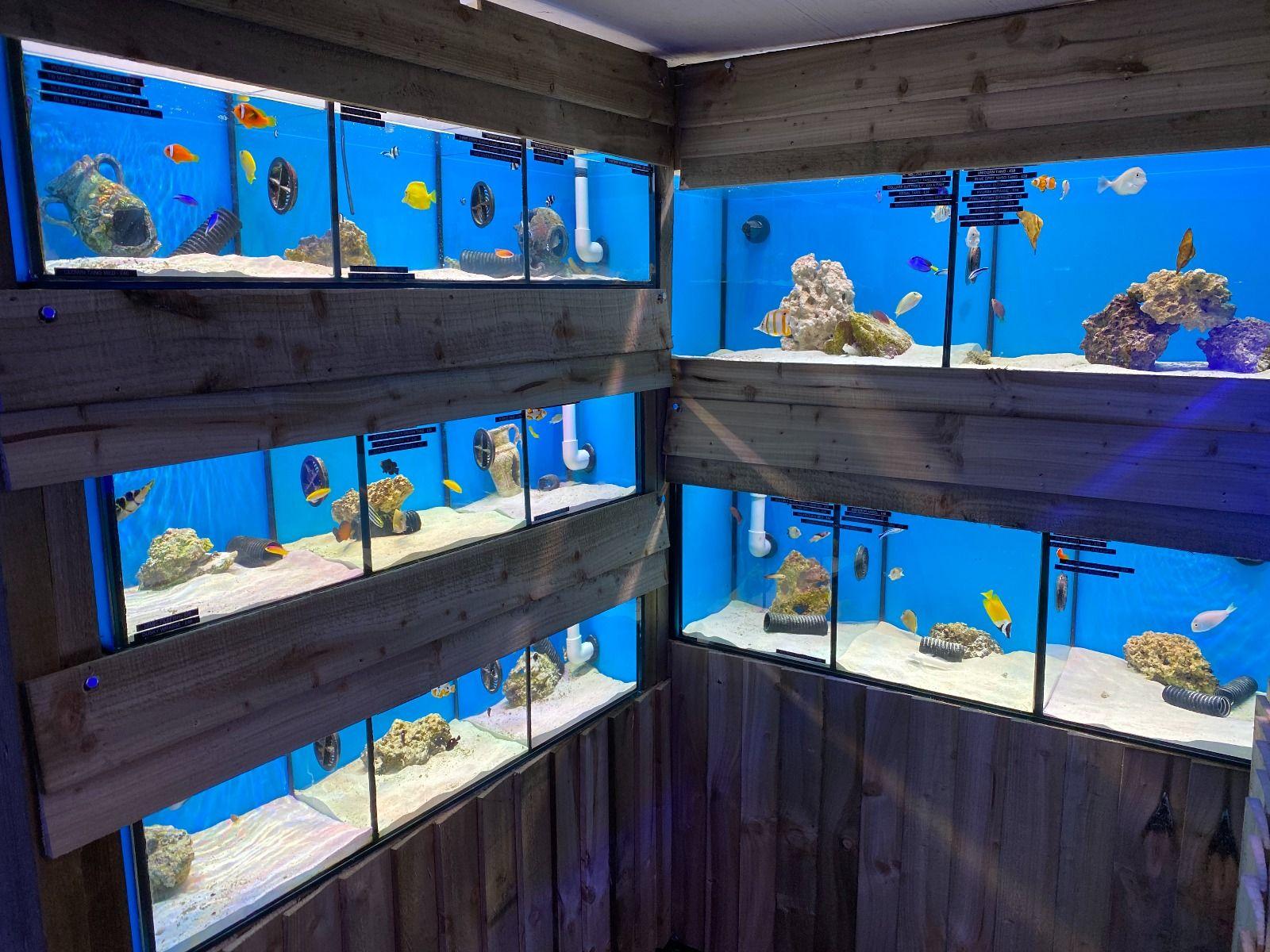 Marine Room - Fish
